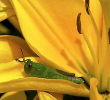 Grasshopper with Lily by Robert Bruce Anderson