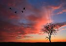 Open Billed Storks at Sunset, Botswana, Africa. by photosecosse /barbara jones