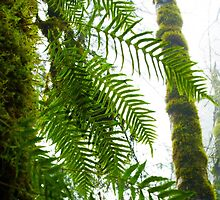 Tree Ferns In The Mist by ticklisharbour