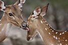 Wash Up Deer! by Olivia Moore