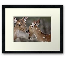 Wash Up Deer! Framed Print