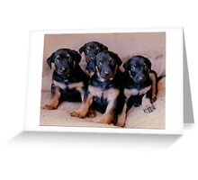 My Dobie Pups---another one for Ginny Greeting Card