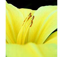 Primary Yellow Photographic Print