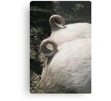 Pig Tails Metal Print