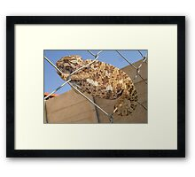 Chameleon In Shades of Brown on Fence Framed Print