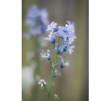 Blue Flower Photographic Print