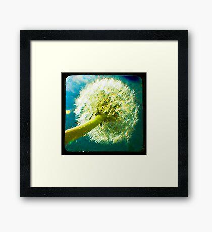 Dandelion TTV Framed Print