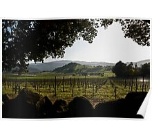 Evening haze and shadows in Napa Valley Poster