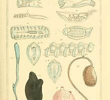 The Animal Kingdom by Georges Cuvier, PA Latreille, and Henry McMurtrie 1834  282 - Mollusca Mollusks by wetdryvac