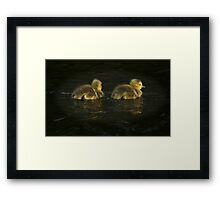 Fuzzballs on the Water Framed Print