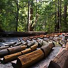 Theatre among the Redwoods by MarkEmmerson