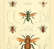The Animal Kingdom by Georges Cuvier, PA Latreille, and Henry McMurtrie 1834  501 - Insecta Insects by wetdryvac
