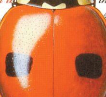 Ladybug Luck Sticker