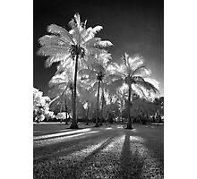 A shining Photographic Print