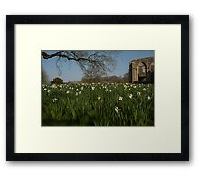 SPOT THE YELLOW - FOUNTAINS ABBEY RUINS Framed Print