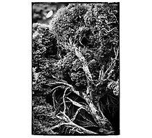 Black and white botany - 1 Photographic Print
