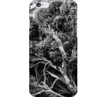 Black and white botany - 1 iPhone Case/Skin