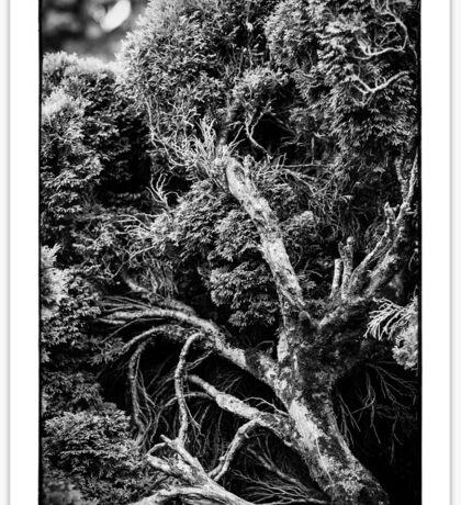 Black and white botany - 1 Sticker