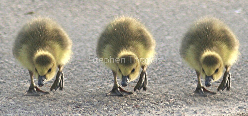 On Your Mark! Get Set!.... by Stephen Thomas