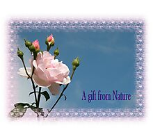 A gift from Nature Photographic Print