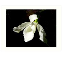The White Orchid Art Print