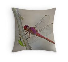 Orthemis discolor (Carmine Skimmer) Throw Pillow
