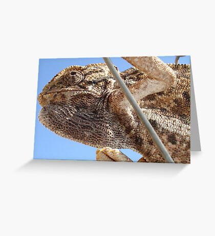 Close Up Of A Climbing Chameleon Greeting Card