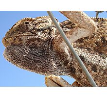 Close Up Of A Climbing Chameleon Photographic Print