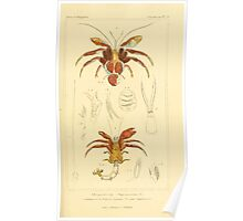 The Animal Kingdom by Georges Cuvier, PA Latreille, and Henry McMurtrie 1834  332 - Crustacea Crustaeans Poster