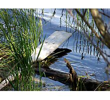 The Oar Photographic Print