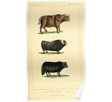 The Animal Kingdom by Georges Cuvier, PA Latreille, and Henry McMurtrie 1834 636 - Mammalia Mammals Poster