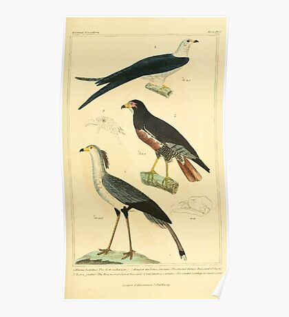 The Animal Kingdom by Georges Cuvier, PA Latreille, and Henry McMurtrie 1834 646 - Aves Avians Birds Poster
