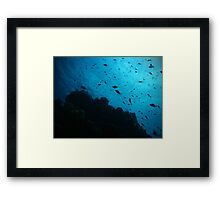 Life on the reef Framed Print