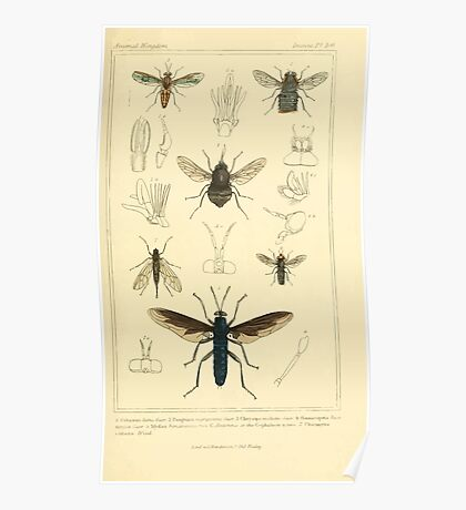 The Animal Kingdom by Georges Cuvier, PA Latreille, and Henry McMurtrie 1834  527 - Insecta Insects Poster
