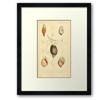 The Animal Kingdom by Georges Cuvier, PA Latreille, and Henry McMurtrie 1834  241 - Mollusca Mollusks Framed Print