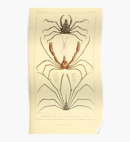 The Animal Kingdom by Georges Cuvier, PA Latreille, and Henry McMurtrie 1834  328 - Crustacea Crustaeans Poster