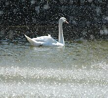 swan  by lightwild