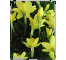 Daffodils dripping wet iPad Case/Skin