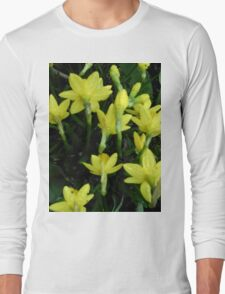 Daffodils dripping wet Long Sleeve T-Shirt