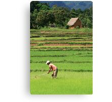 Green Field, Rice Paddy, Madagascar Canvas Print