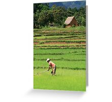 Green Field, Rice Paddy, Madagascar Greeting Card