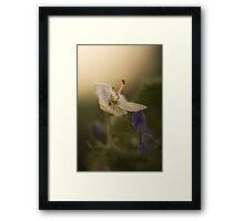 White and violet (from wild flowers collection)  Framed Print