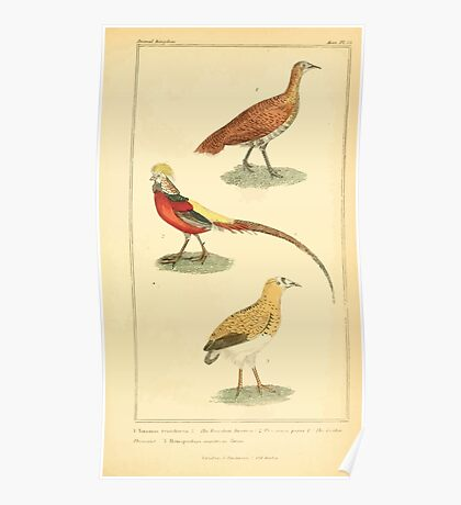 The Animal Kingdom by Georges Cuvier, PA Latreille, and Henry McMurtrie 1834 715 - Aves Avians Birds Poster