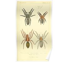 The Animal Kingdom by Georges Cuvier, PA Latreille, and Henry McMurtrie 1834  362 - Arachnides Arachnids Poster