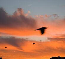 Sunrise with a flying birds by moonimage