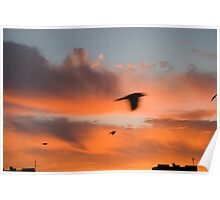 Sunrise with a flying birds Poster