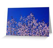 Spring Blossoming of a Sakura Greeting Card