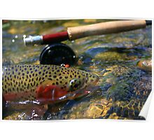 Wild Rainbow Trout . Poster