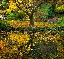 Bare Tree Island by Alex Stojan