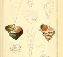 The Animal Kingdom by Georges Cuvier, PA Latreille, and Henry McMurtrie 1834  235 - Mollusca Mollusks by wetdryvac